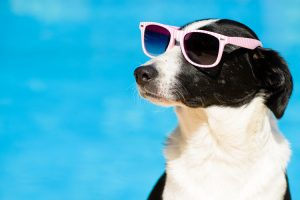 doggie with shades